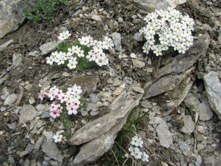 verso la melmise -gita cai- 27-05-2012 029